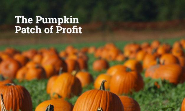 The Pumpkin Patch of Profit